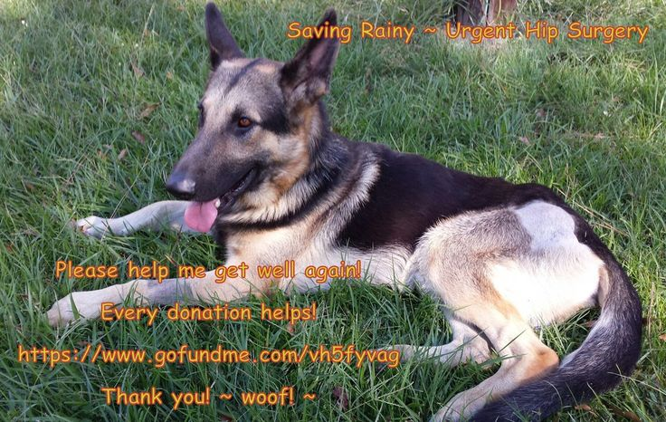 GetYourRescueOn Please support NewOrleans GSD Rescue http://www.nogsr.org/ Helping us help Rainy!   — Kate R…