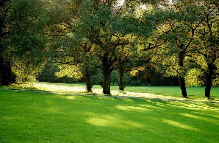 Час назад вернулась с утренней прогулки по парку (которая у меня вместо пробежки :) ). Потрясающее настроение создает такая прогулка: солнце, красивый пустой парк, распускающиеся листья, птицы давно проснулись, а люди и город только просыпаются. Полчаса замедления после быстрого шага и перед насыщенным днем.