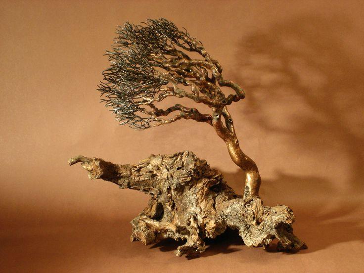 Windblown on Driftwood