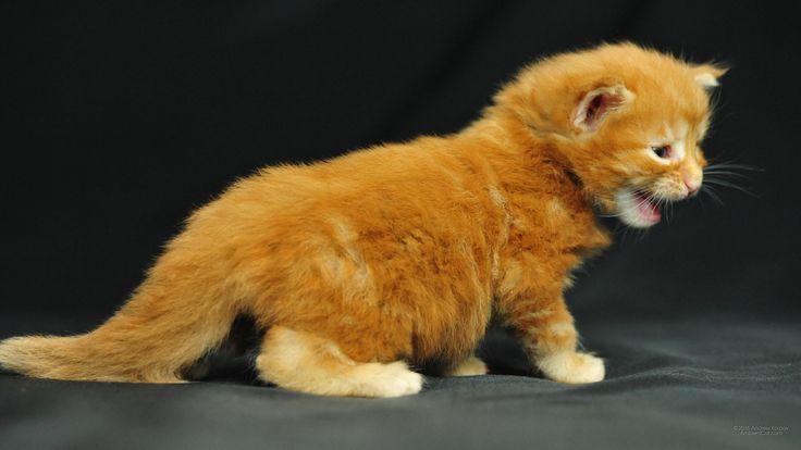 Śmieszne-koty-i-kocięta-194.jpg (2560×1440)