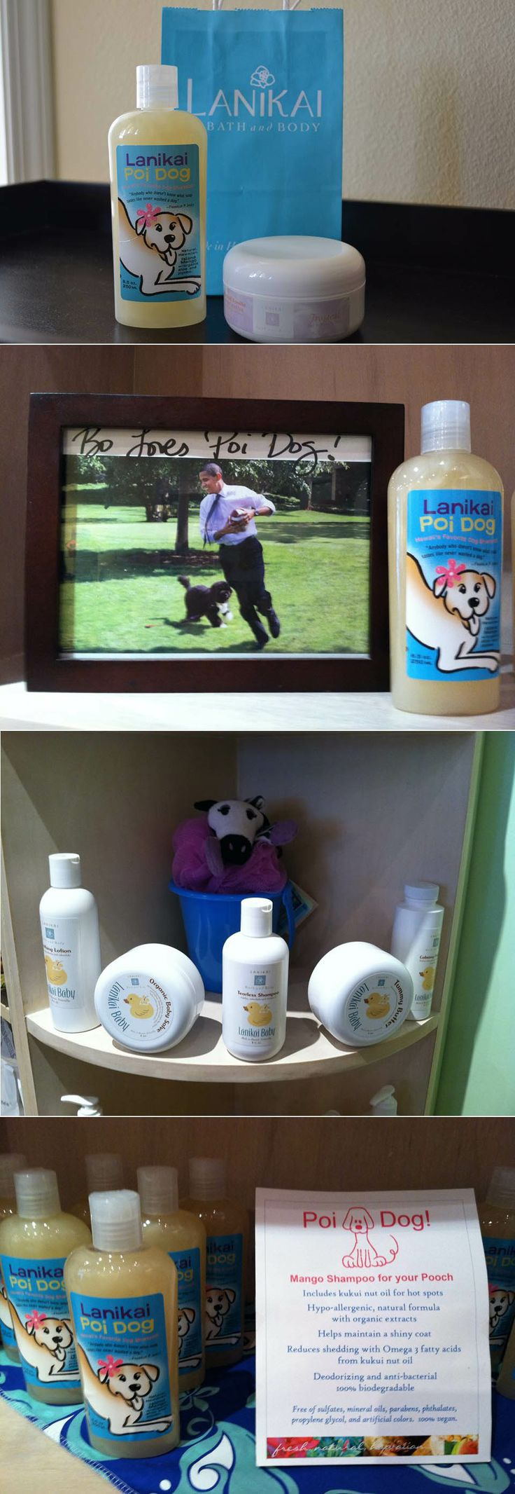 ラニカイ、海だけじゃないんです! この、 LANIKAI Bath and Body も大好きなお店です。 先日お買い上げしたのは、この「Orchid Vanilla」 のBody Butterと、犬用シャンプー。 シャンプーはこの間、我が家の末娘を洗うのに使用したところ、なかなか使い心地の良い感触でした。 ボディクリームは、すごく気に入っています。 香りも、プルメリアやらマンゴーやらハワイらしいものが沢山ありますが、今回はいつもと違うこの香り、ちょっと外国の大人な女性の香りがします♪ このお店の犬用シャンプーの棚に、オバマ大統領の愛犬との写真がありました。 冬の休暇でカイルアに来る際に、こちらのお店に寄られる事もあるのでしょう。 ハワイに休暇で来ている時には意外と気さくに話しかけられるようですよ。  ハワイも冬が終わり、太陽の下に出る事が多くなります、乾燥しがちな体もメンテナンスしないと駄目ですね~~♪  マハロ Mama ❤ S