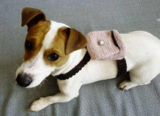 Knitting Pattern For Jack Russell Dog Coat : 196 best images about Crocheted Pet Stuff on Pinterest Crochet dog sweater,...