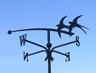 these swallows won't fly south