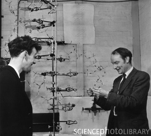 who has discovered the dna structure The discovery of dna's structure: they were hardly modest, these two brash young scientists who in 1953 declared to patrons of the eagle pub in cambridge, england, that they had found the secret .