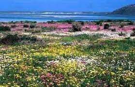 Namaqualand in spring