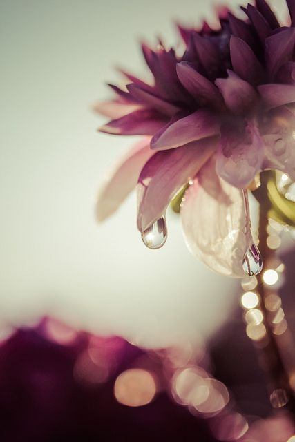 araknesharem: Капли Wally&Roops на Flickr. ♥