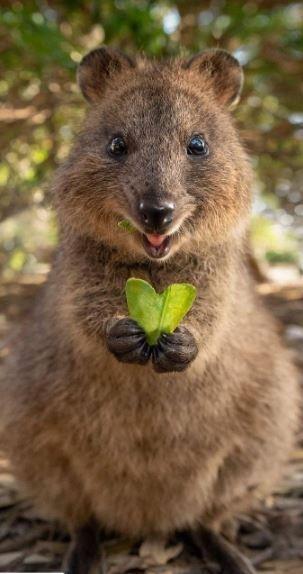Herz schenken … um Liebe zu fühlen, Liebe zu sein, Liebe zu geben … Es ist … – Tiere Ideen