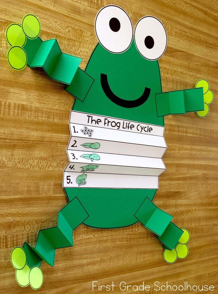 Frog Life Cycle is a packet of activities to learn about the growth of a frog. The packet includes posters, booklets, vocabulary cards, printables. and a craft. Students sequence, compare and contrast, label, match vocabulary words to pictures, and write about the life cycle of a frog. It makes a great addition to a science or spring unit of study.