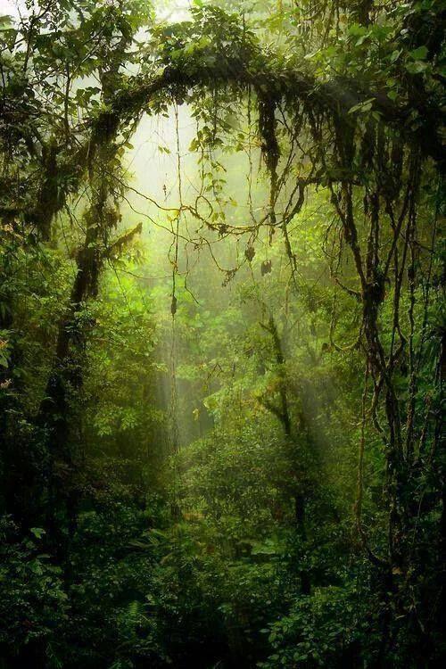 Les plus belles forêts du mond