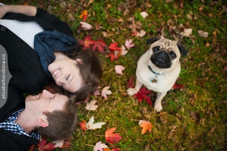Ottawa engagement and dog photographer, photos by elizabethandjane photography