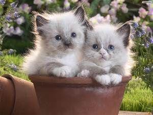 2 witte katjes in bloempot