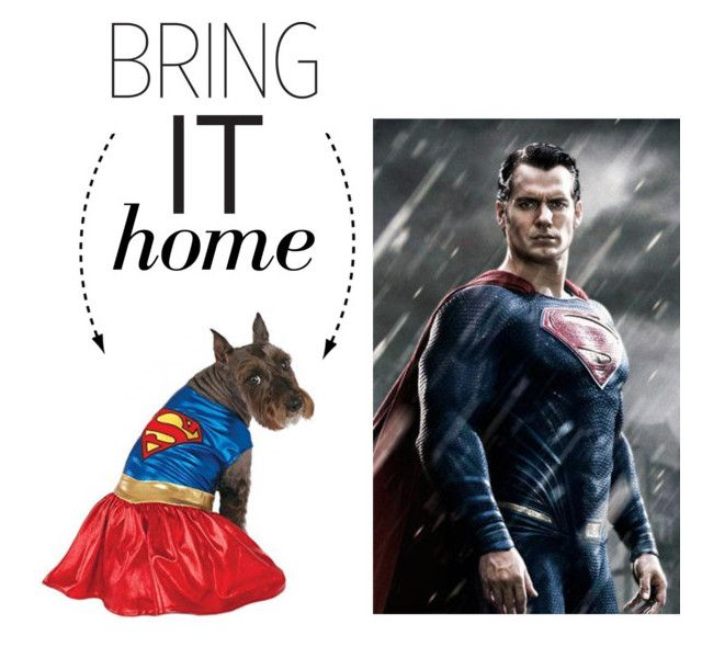 """""""Bring It Home: Superman Dog Costume"""" by polyvore-editorial ❤ liked on Polyvore featuring interior, interiors, interior design, home, home decor, interior decorating and bringithome"""