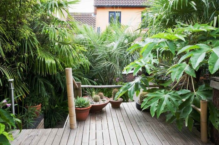 the 25  best small tropical gardens ideas on pinterest