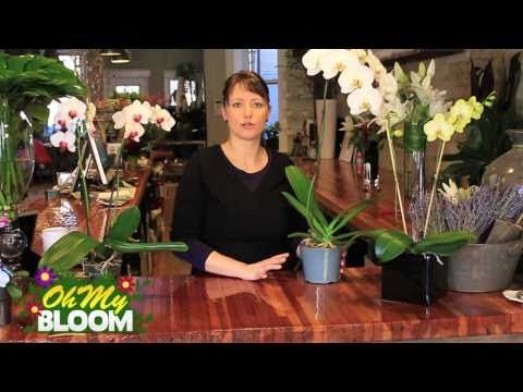 Professional Tips for Keeping Your Orchids Healthy and Beautiful {Video} - DIY & Crafts