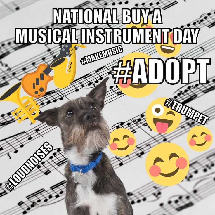 Lewes is a real shelter dog, and he's celebrating National Buy a Musical Instrument Day
