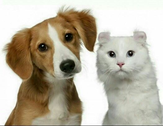 16 best tienda vegaestar images on pinterest store door prizes crystals dog spa provides top notch pet grooming services through the pleasant grove ut area call and make an appointment with a professional solutioingenieria Gallery
