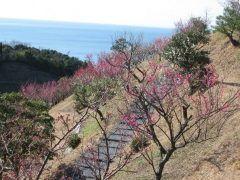 梅と海を一望光市の冠山総合公園梅の里では梅が見頃の季節を迎えていますよ 約100種類の2000本の梅がそれぞれ花を咲かせていきます 白や桃色黄色の梅など珍しい梅もご覧頂けること間違いなし毎年見頃は2月中旬頃です そして海を見下ろす絶景も最高です 2月11日土からは梅まつりも開催されますよ(.) また子供たちが遊べる公園子ども森や芝生広場オートキャンプ場など施設も充実 ご家族で遊びに行ってみてください  #山口#光市#公園#キャンプ#梅#アスレチック#春#立春#イベント tags[山口県]