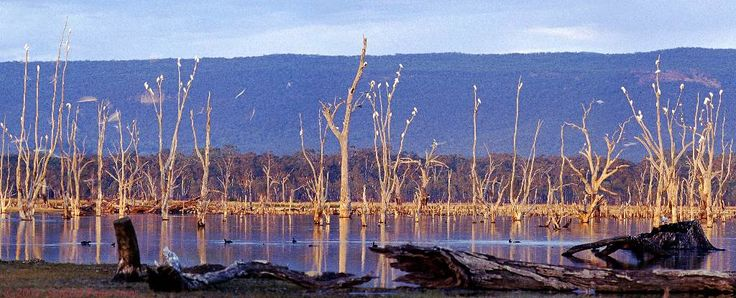 lake fyans - Google Search