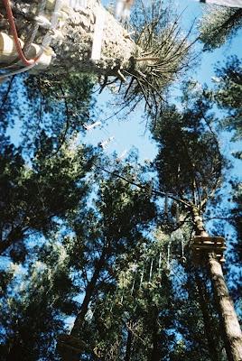 Adrenaline Forest, BOP, NZ