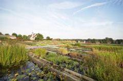 Siergrassen - Vaste plantenkwekerij Guido Van de Steen