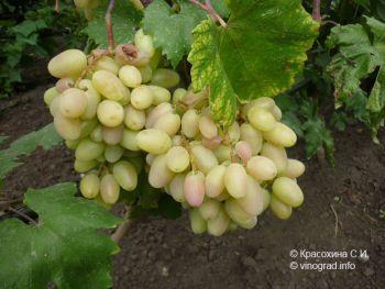Преображение – гроздь