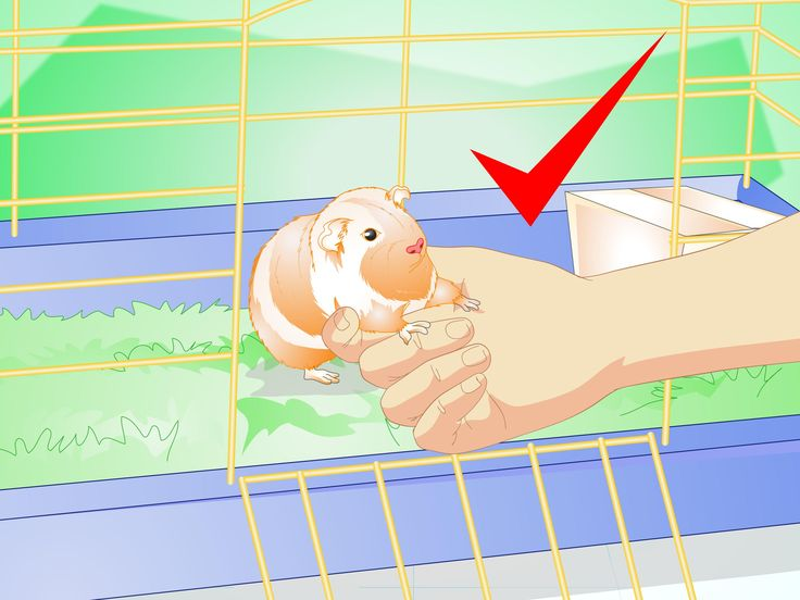 Guinea pigs are small animals that make fun and lively pets. Since guinea pigs spend a lot of time in their cages, it's important to make sure that you have the right size cage and that it is properly outfitted with everything needed to...