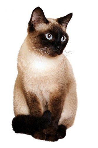 A Siamese Cat with Bright Blue Eyes on a White Background Wall Decal - 18 Inches H x 12 Inches W - Peel and Stick Removable Graphic Wallmonkeys Wall Decals http://www.amazon.ca/dp/B00DL5LJR4/ref=cm_sw_r_pi_dp_LsaUub1MEB8Q9