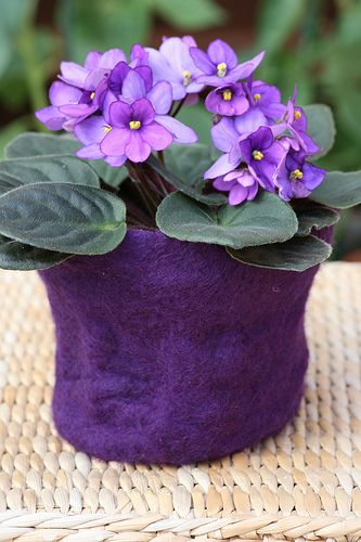 Wet felted flower pot.