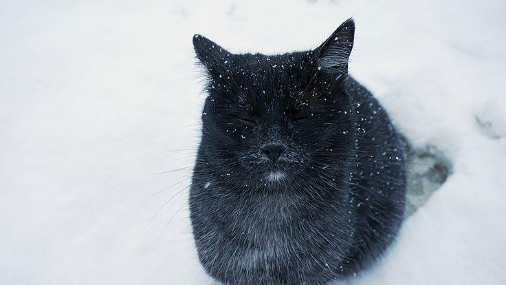 Gunner enjoying the snow. Does your cat love to play in the snow as well? 💙😸❄️⛄ #gunner #enjoyinglife #snow #winter #january #play#cat #catlife #highonlife #zen #inthegarden #winterishere