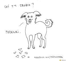 Znalezione obrazy dla zapytania psie sucharki