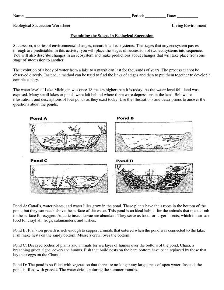science worksheets ecosystem biology worksheet get now doc education items pinterest. Black Bedroom Furniture Sets. Home Design Ideas