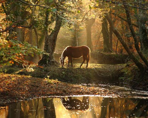 New Forest Pony by Highland Water by Kevan Brewer