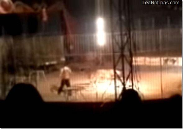 Video aterrador: Este tigre mató a su domador en plena función del circo - http://www.leanoticias.com/2013/02/05/video-aterrador-este-tigre-mato-a-su-domador-en-plena-funcion-del-circo/