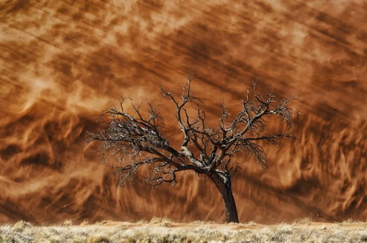 Dune and Tree  by Peter Delaney on www.digitalgallery.co.za