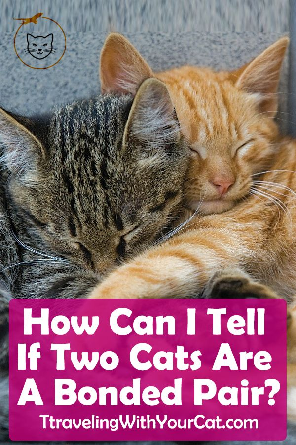 How Can I Tell If Two Cats Are A Bonded Pair Cats Cat Cuddle Cat Behavior