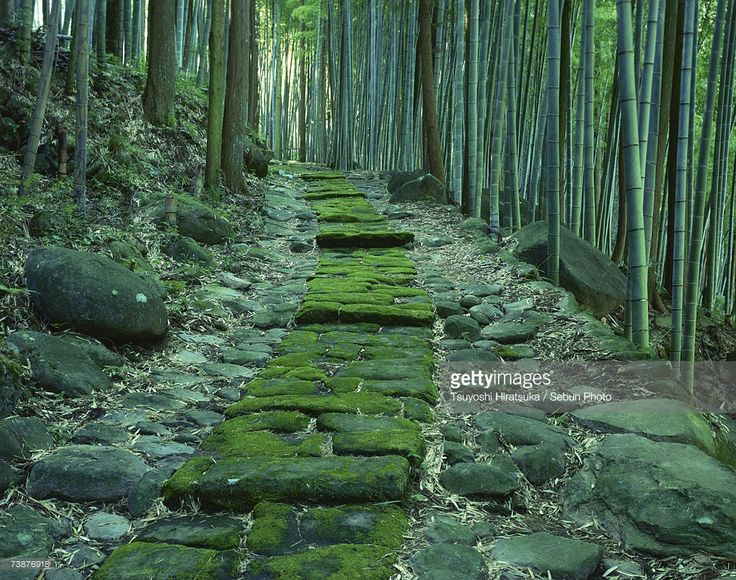 japan-oita-prefecture-stone-path-passing-through-forest-picture-id73876918 (1024×807)