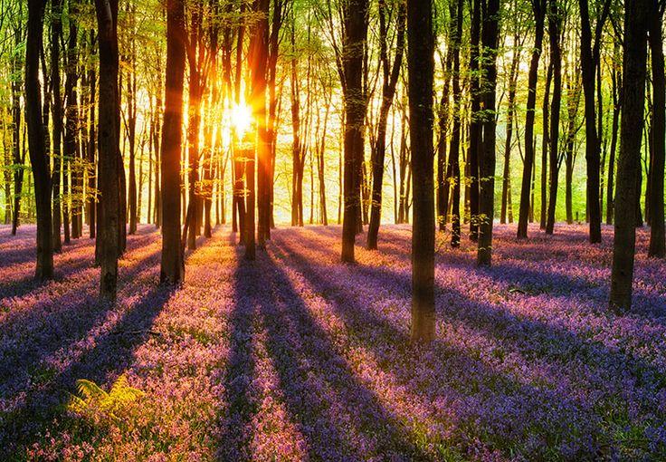 25 beste idee n over bos behang op pinterest boom behangpapier slaapkamer behang en - Maak een gang ...