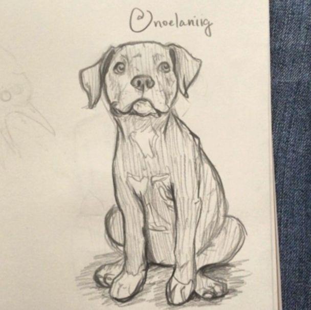 16 Susse Welpen Zeichnen Kunst Tiere Zeichnen Tiere Malen
