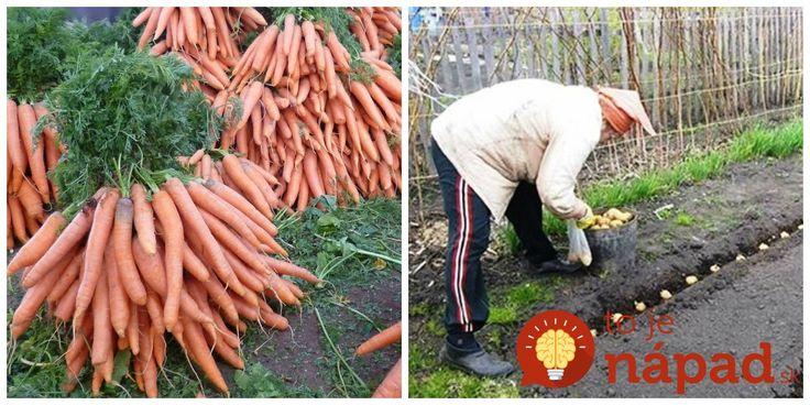 Myslíte si, že s letom končí aj možnosť dopestovať si vlastné plodiny? Ani zďaleka. Poradíme vám, ktoré plodiny sa oplatí vysadiť na jeseň, pretože dokážu zvládnuť pobyt v zamrznutej pôde a na jar vybehnú zo zeme v plnej sile. V čase, kedy budú ostatný ešte len vysádzať priesady, vy už budete zberať prvú úrodu! Mrkva...