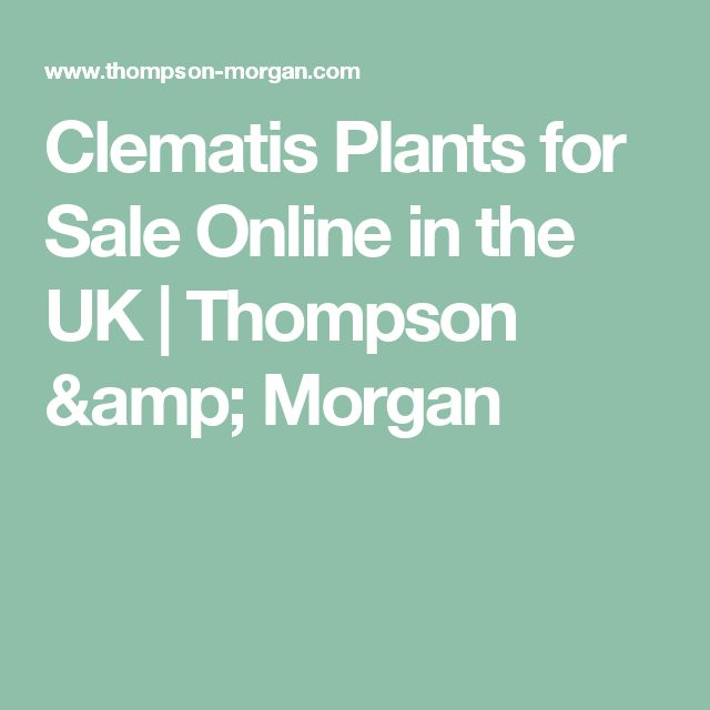 Clematis Plants for Sale Online in the UK | Thompson & Morgan