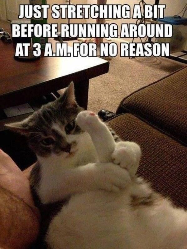 Cat Meme Of The Decade Cute Cat Memes Funny Animals With Captions Funny Animals