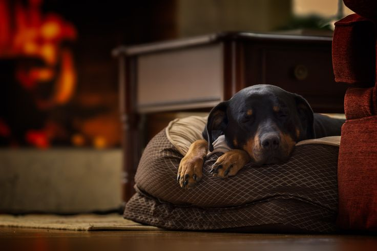 Lake District Pet Friendly Cottages - Treat your four-legged friend to an exciting trip to the Lake District in one of our pet friendly cottages! There's so many fun-filled walks to enjoy as well as plenty of dog-friendly pubs and attractions.