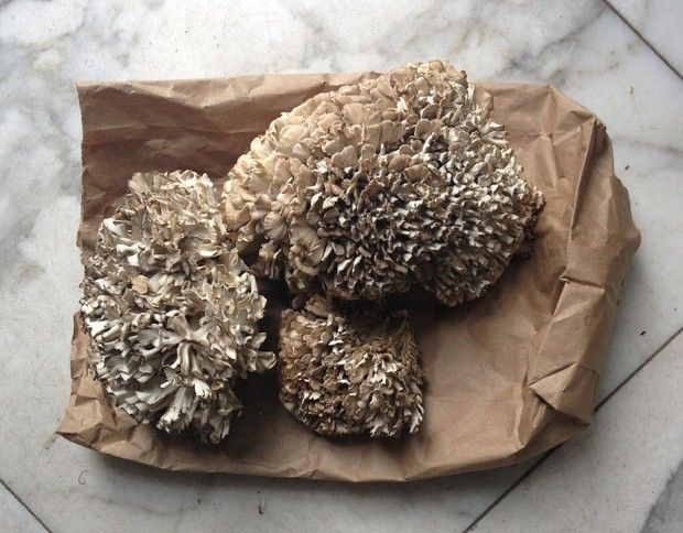 How to Grill Maitake Mushrooms, a.k.a. Hen of the Woods - Bon Appétit