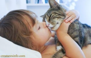 Cute Boy Cat Names For Cat Lovers