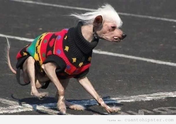 Perro hipster con jersey estampado