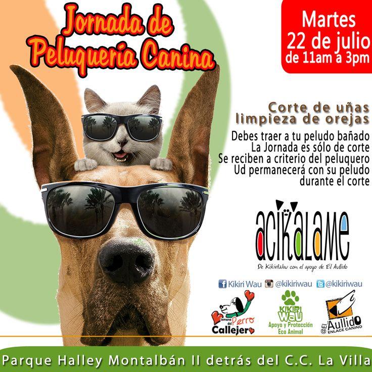#Acikalame Jornadas de peluquería canina a bajo costo para perros y gatos rescatados!