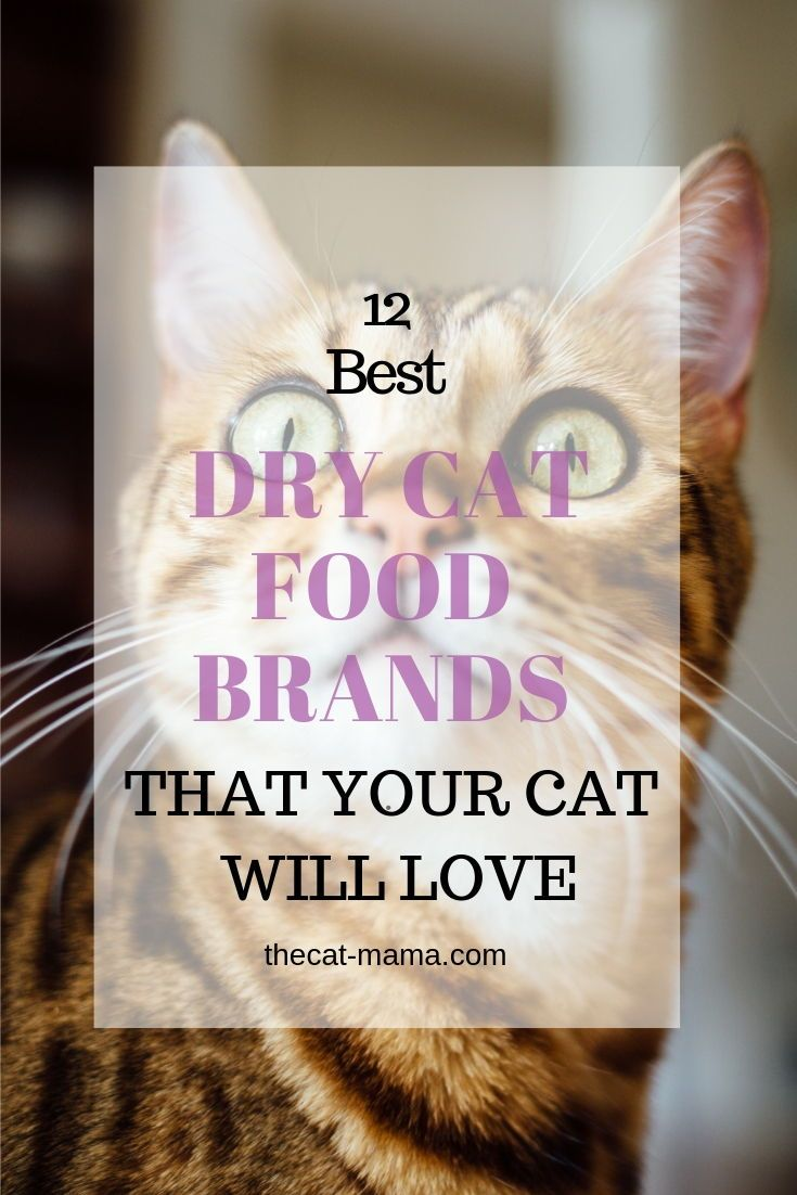 12 Best Dry Cat Food Brands To Buy For Your Cat Cat Food Brands