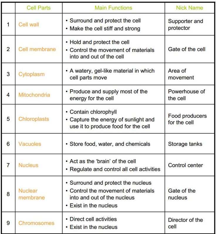 of Cell City Analogy Worksheet Answers Sharebrowse – Cell City Analogy Worksheet