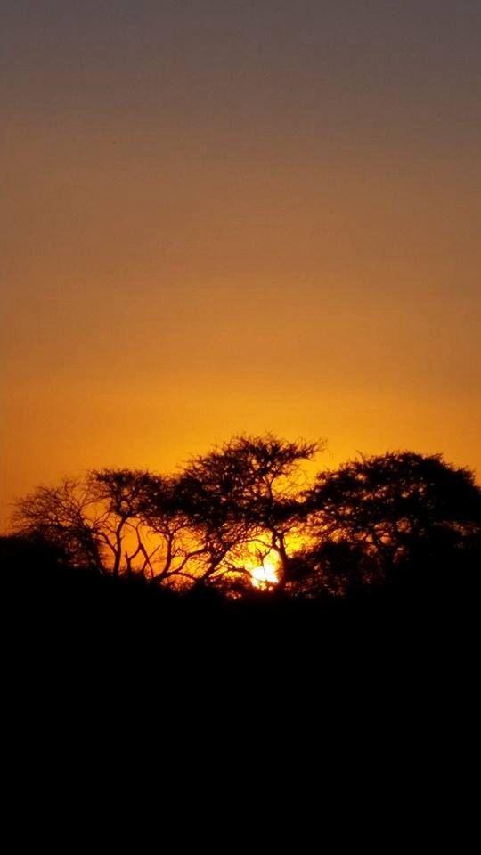Bushveld sunset. South Africa