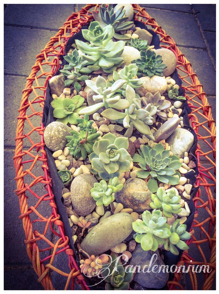 Succulent red basket